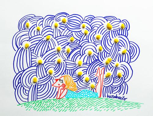mimose burabacio